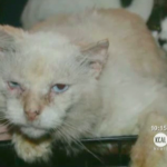 #Disgusting: Filthy Family houses more than 100 Cats